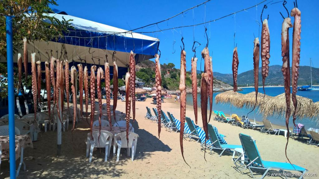 Octopuses drying in the sun